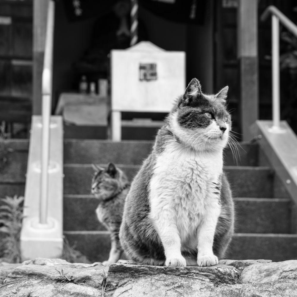 猫巡り – Cat Journeys –