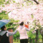 作品「そっと傘を差しだした(Behind your sakura shooting)」