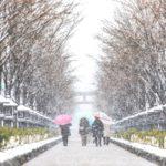 作品「春の雪、雪の参道(Sakura Road, Snowy Road)」
