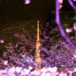 作品「桜ロケット打ち上げ(Sakura rocket)」