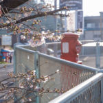 作品「届け、サクラ便り(Sakura news, reach you!)」